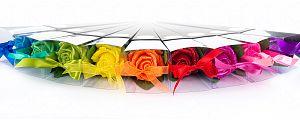Nebeška čarobna vrtnica